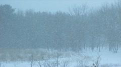 Snow falling near a wood full HD - stock footage