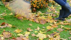 Woman rubber boots rake autumn maple tree leaves parterre Stock Footage