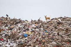birds and dogs on the landfill - stock photo