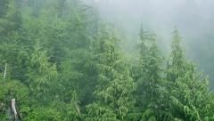 Flying Over Misty Forest Stock Footage