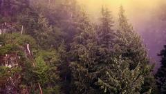 Flying Over Magical Misty Forest Stock Footage