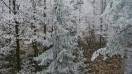 Stock Video Footage of AERIAL: frozen forest