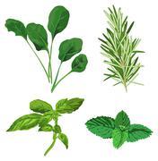 Herbs Stock Illustration