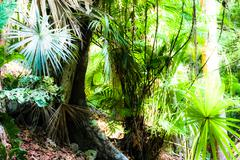 A scene looking straight into a dense tropical rain forest, taken in costa ri Stock Photos