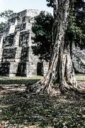 Mayan ruins of tikal Stock Photos