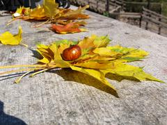 Stock Photo of autumn leaves and chestnuts