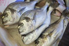 Dorade Fish Stock Photos