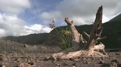 Volcano damaged landscape at the foot of the Rabaul volcano in PNG 20 Stock Footage