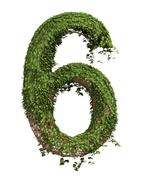 The Number Six - Ivy - stock illustration