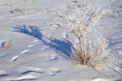 Shrub in the field covered with snow Stock Photos