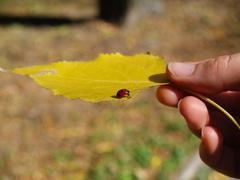 Leaf and ladybug Stock Photos