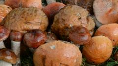 Closeup pile stack wet orange-cap red cap mushrooms grass Stock Footage