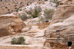sparse vegetation in the mountains of petra - stock photo