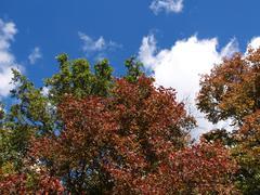 Stock Photo of sky and tree