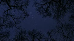 Night sky stars between trees time lapse 10856 Stock Footage