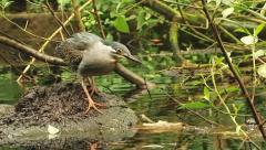 Grey bird hunting Stock Footage