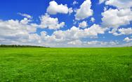 Stock Photo of green field