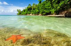 Stock Photo of Starfish in Clear Water