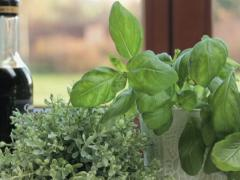 Fresh herbs in the kitchen, tracking shot NTSC Stock Footage