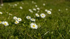 White flowers in the park Stock Footage