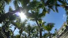 Palms at tropical resort - stock footage