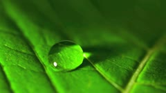 Close up of a leaf showing veins and single water droplet Stock Footage