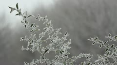 Frozen green branch in the smoothly wind breeze Stock Footage