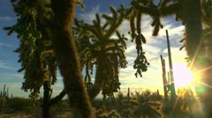 Unique Arizona Desert Landscape Stock Footage