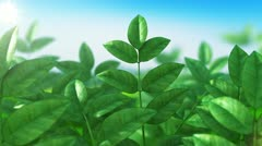 Beautiful green grass swaying in looped animation. HD 1080. Stock Footage