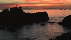 Beautiful ocean sunset, rocks seabirds crane Stock Footage