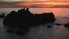 Beautiful ocean sunset, waves seabirds, crane Stock Footage