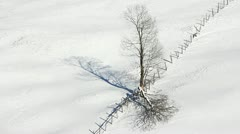 Detail of tree and fence on snow Stock Footage