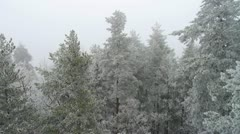 AERIAL: frozen forest Stock Footage
