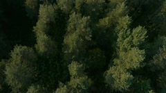 Stock Video Footage of AERIAL: Treetops