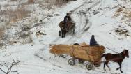 Horse-drawn carts carrying reed Stock Footage