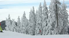 Fir trees covered with snow Stock Footage
