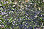 Stock Photo of green moss wall