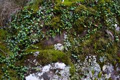 Moss and creeper Stock Photos
