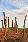 aboriginal poles - stock photo