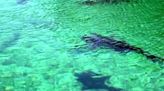 Sharks, Sea Creatures, Fish, Animals Stock Footage