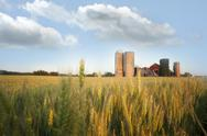 Wheat farm Stock Photos
