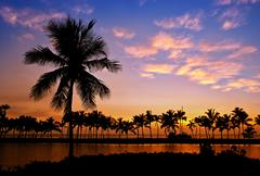 Palm tree silhouettes in Hawaii - stock photo