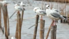Seagull bird Stock Footage