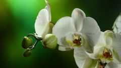 Orchiday flower blossom burgeon Stock Footage
