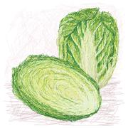 Stock Illustration of napa cabbage with cross section.