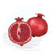 Stock Illustration of pomegranate cross section