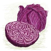 Stock Illustration of red cabbage cross section