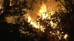 Grass fire Stock Footage