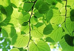 Fresh green foliage Stock Photos