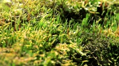 Moss In Spring Forest. Shot Slider. Stock Footage